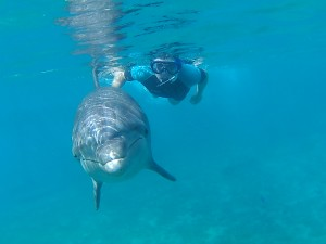 Dave en Bonnie samen onderwater.